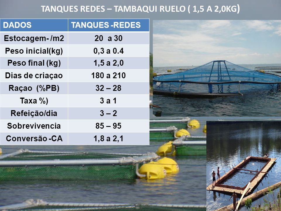 TANQUES REDES – TAMBAQUI RUELO ( 1,5 A 2,0KG)