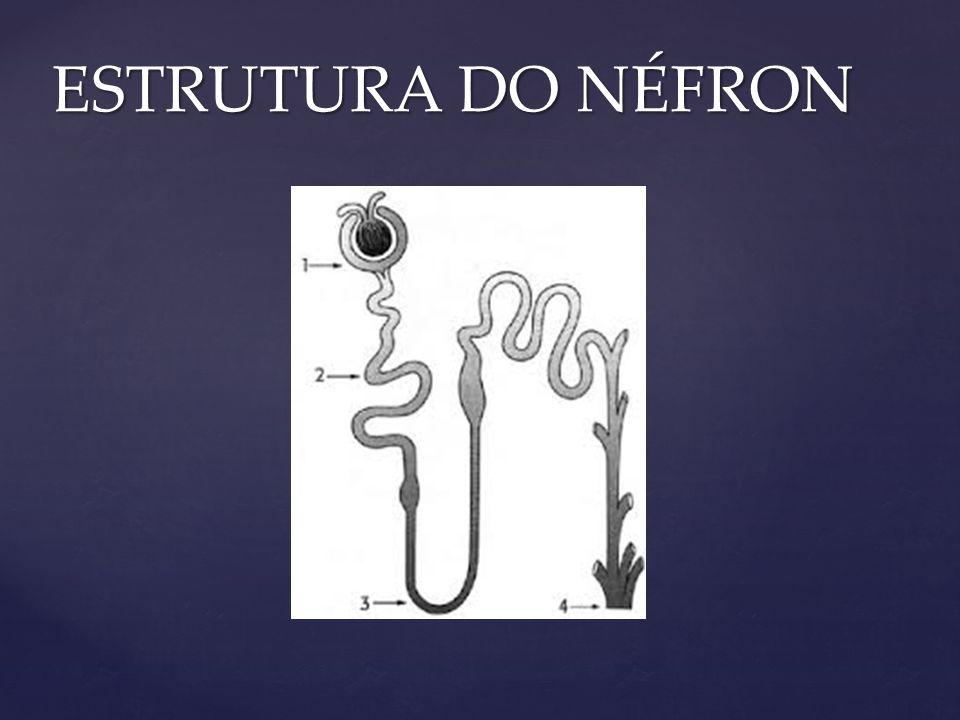ESTRUTURA DO NÉFRON
