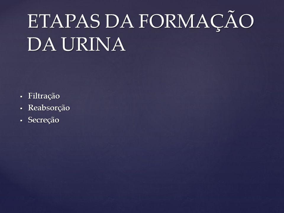 ETAPAS DA FORMAÇÃO DA URINA