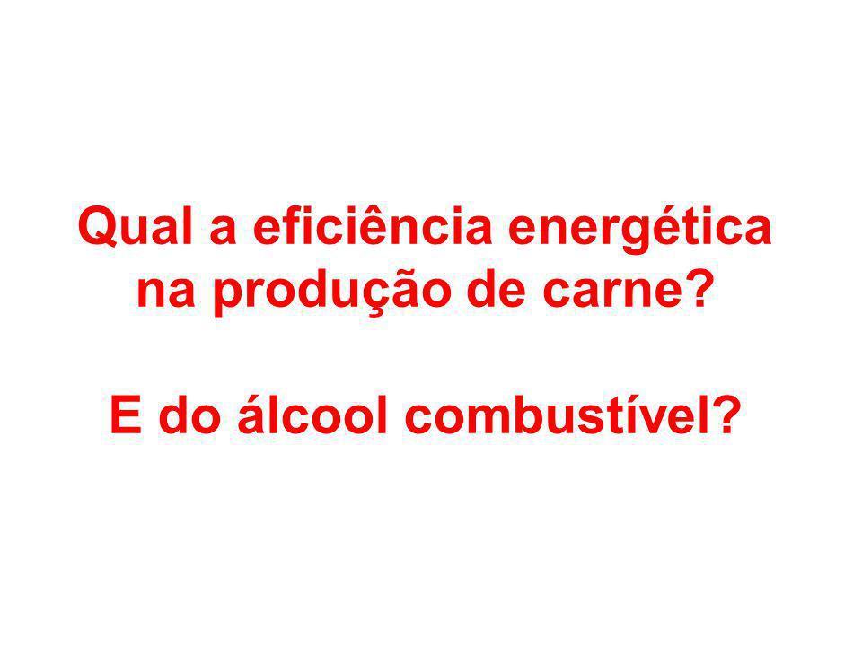 Qual a eficiência energética na produção de carne