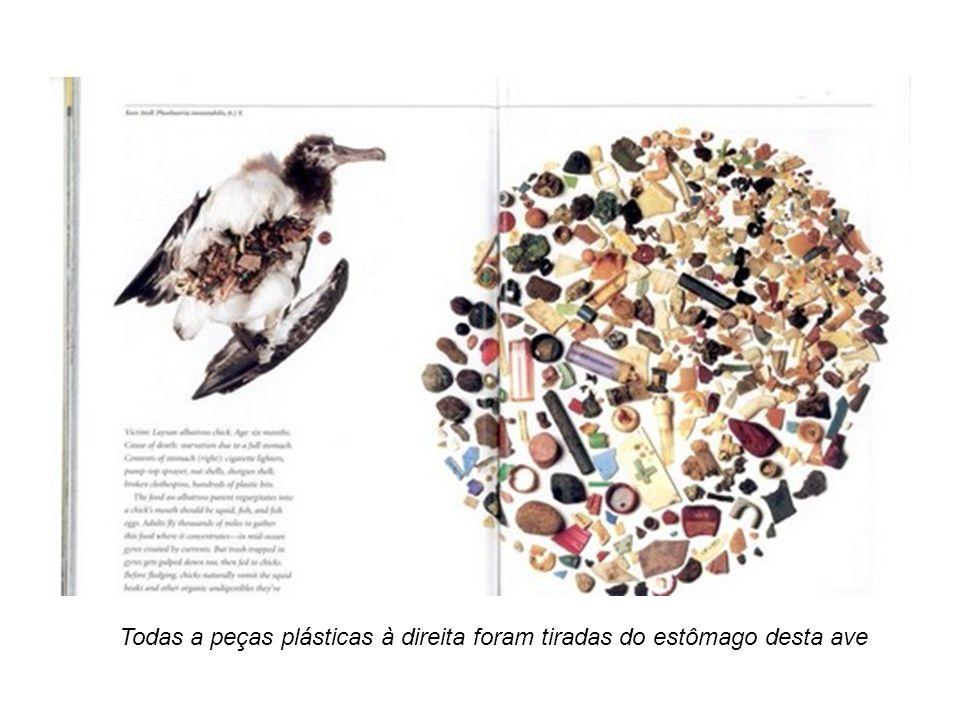 Todas a peças plásticas à direita foram tiradas do estômago desta ave