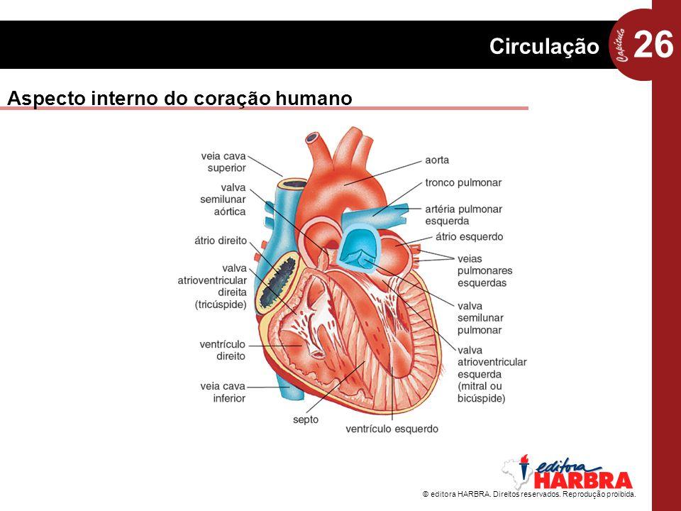 Aspecto interno do coração humano