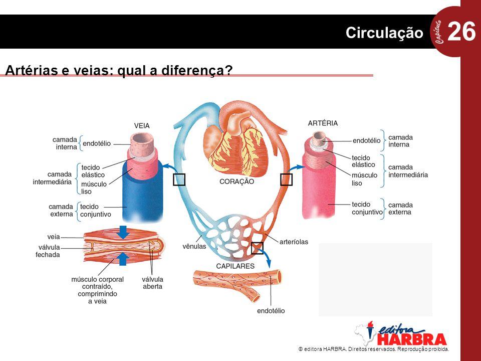 Artérias e veias: qual a diferença