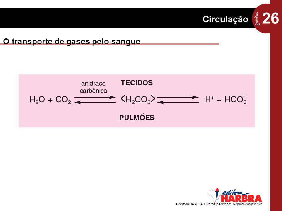 O transporte de gases pelo sangue