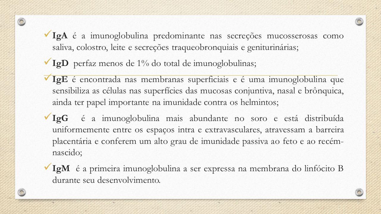 IgA é a imunoglobulina predominante nas secreções mucosserosas como saliva, colostro, leite e secreções traqueobronquiais e geniturinárias;