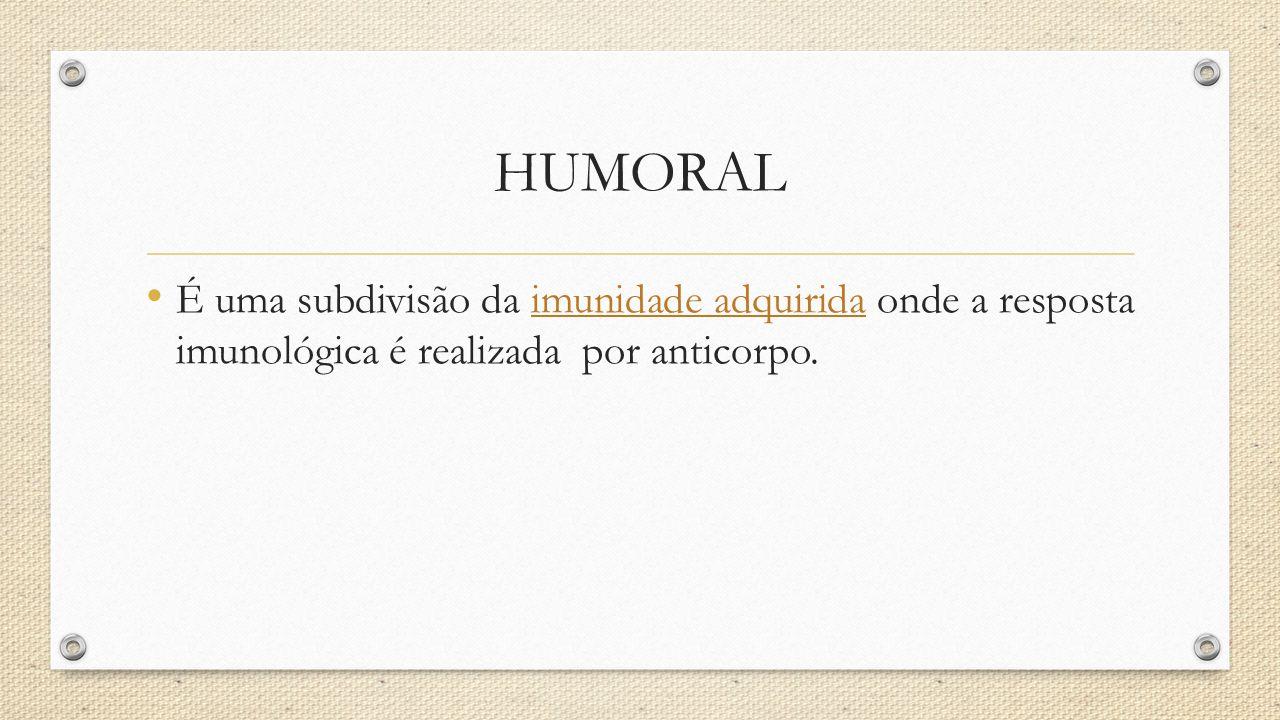 HUMORAL É uma subdivisão da imunidade adquirida onde a resposta imunológica é realizada por anticorpo.