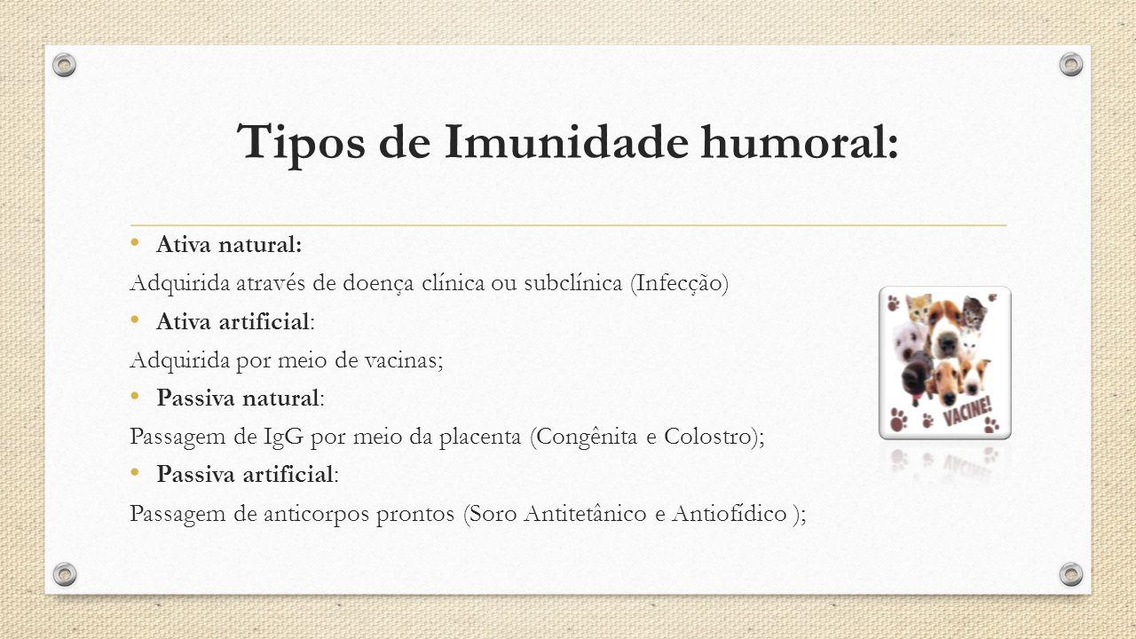 Tipos de Imunidade humoral:
