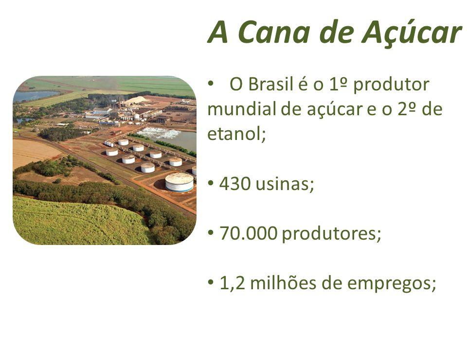 A Cana de Açúcar O Brasil é o 1º produtor mundial de açúcar e o 2º de etanol; 430 usinas; 70.000 produtores;