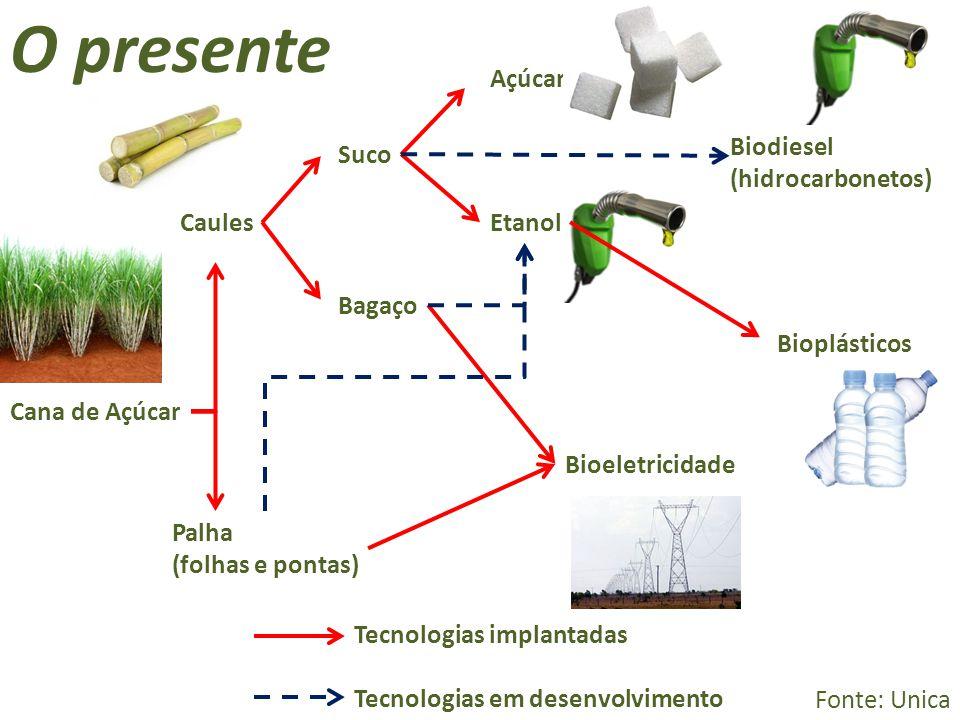 O presente Açúcar Biodiesel (hidrocarbonetos) Suco Caules Etanol