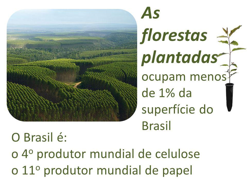 As florestas plantadas ocupam menos de 1% da superfície do Brasil