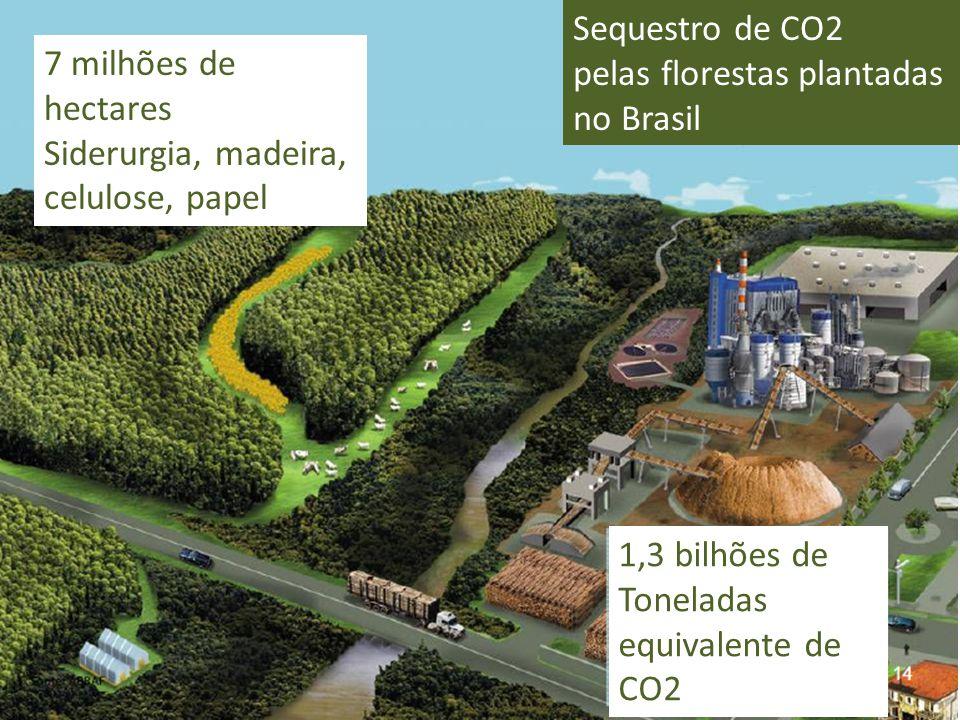 Sequestro de CO2 pelas florestas plantadas no Brasil. 7 milhões de hectares. Siderurgia, madeira,