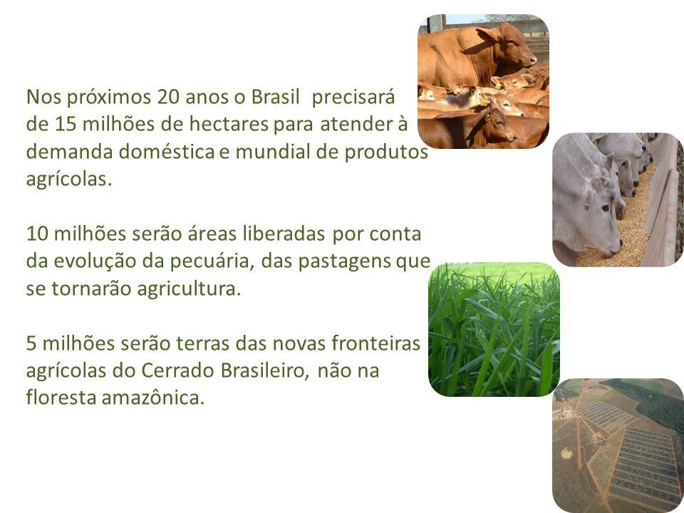 Nos próximos 20 anos o Brasil precisará