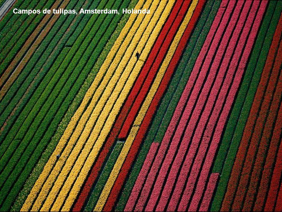 Campos de tulipas, Amsterdam, Holanda