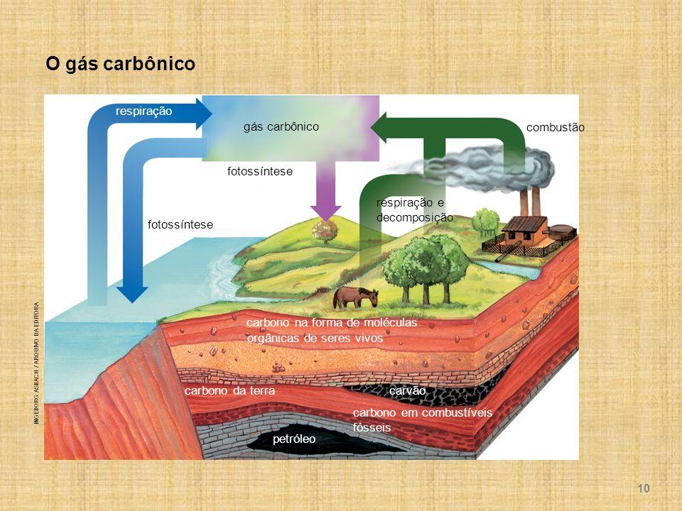 O gás carbônico respiração gás carbônico combustão fotossíntese