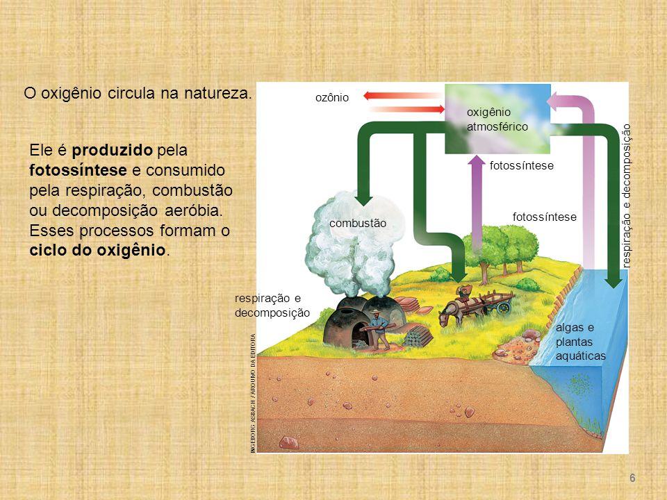 O oxigênio circula na natureza.