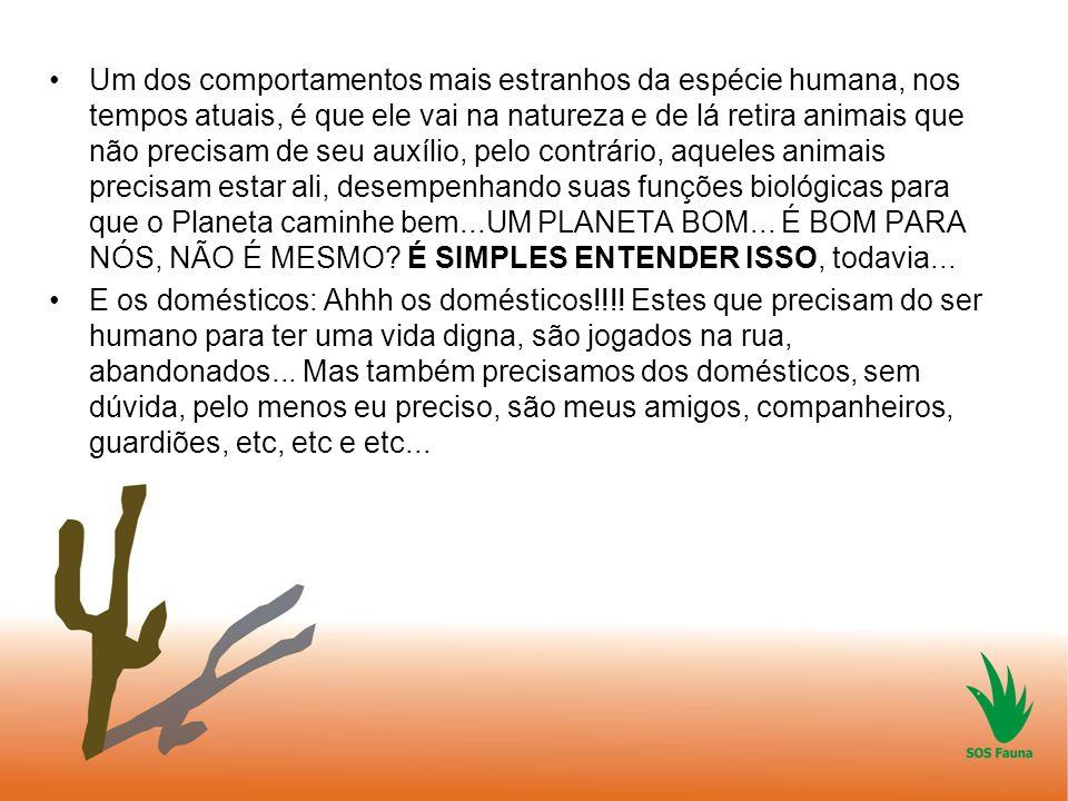 Um dos comportamentos mais estranhos da espécie humana, nos tempos atuais, é que ele vai na natureza e de lá retira animais que não precisam de seu auxílio, pelo contrário, aqueles animais precisam estar ali, desempenhando suas funções biológicas para que o Planeta caminhe bem...UM PLANETA BOM... É BOM PARA NÓS, NÃO É MESMO É SIMPLES ENTENDER ISSO, todavia...