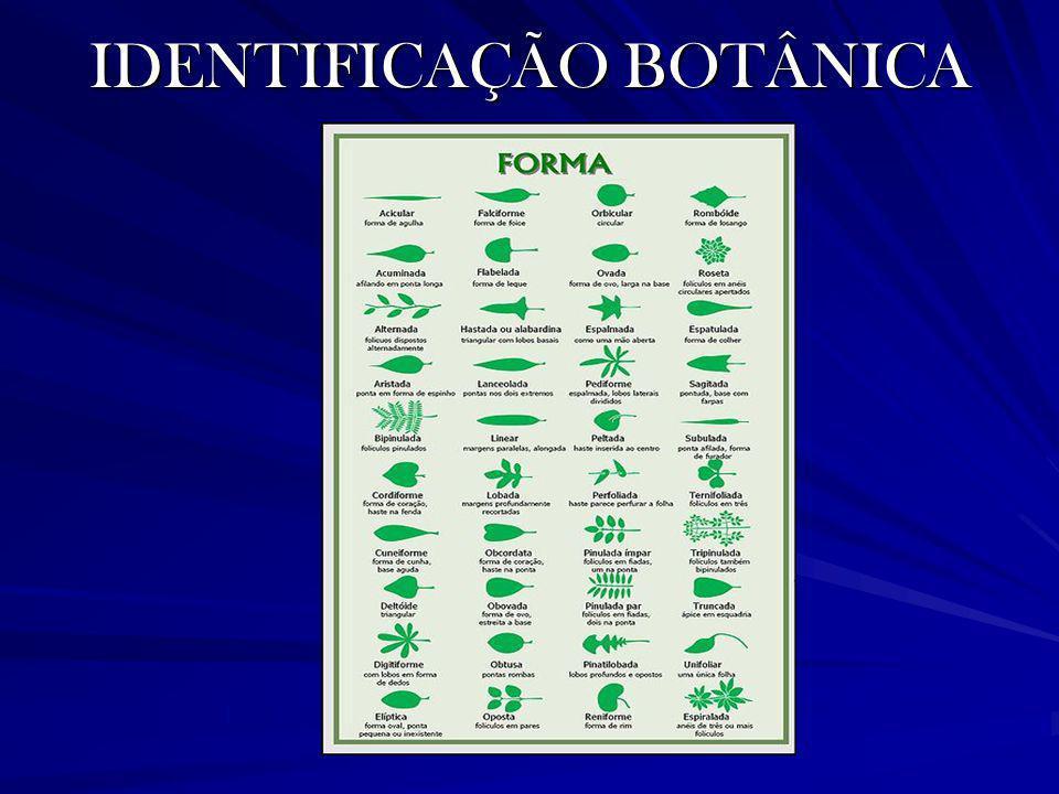 IDENTIFICAÇÃO BOTÂNICA