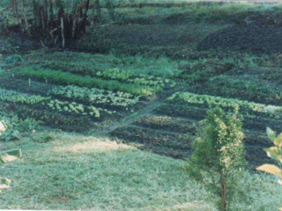 e também havia uma horta comunitária mantida por uma das equipes, com a colaboração dos próprios dependentes