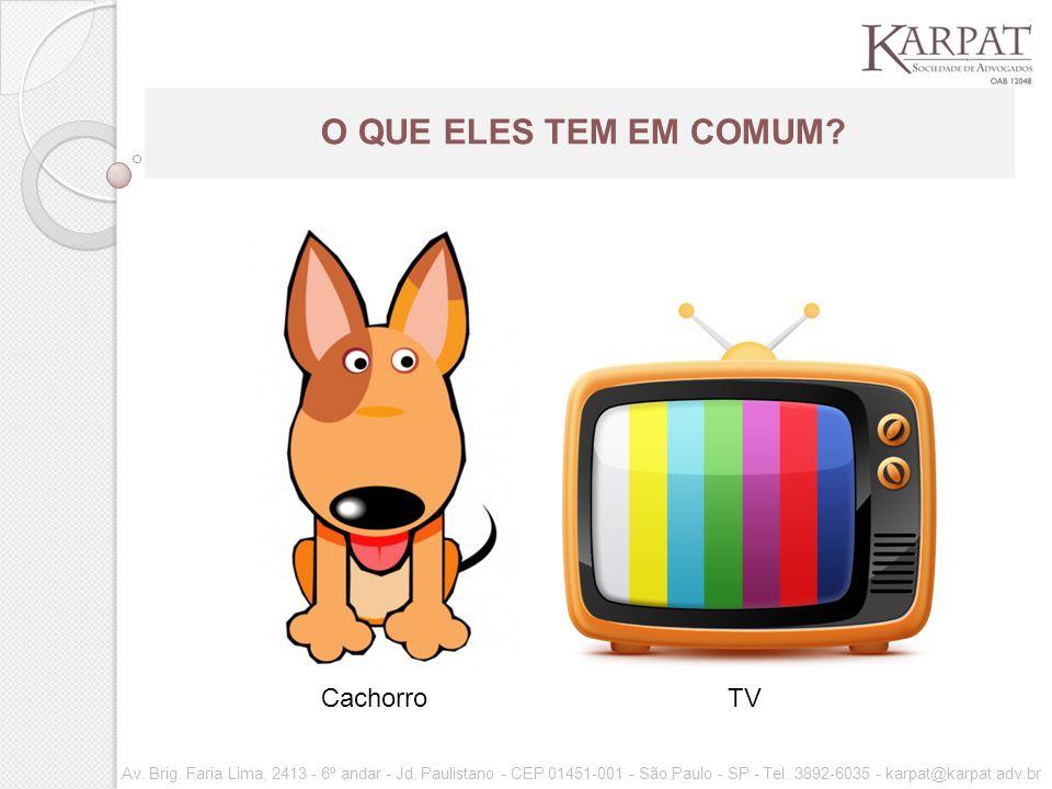 O QUE ELES TEM EM COMUM Cachorro TV