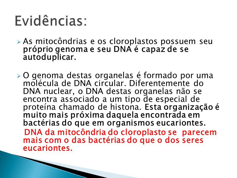 Evidências: As mitocôndrias e os cloroplastos possuem seu próprio genoma e seu DNA é capaz de se autoduplicar.