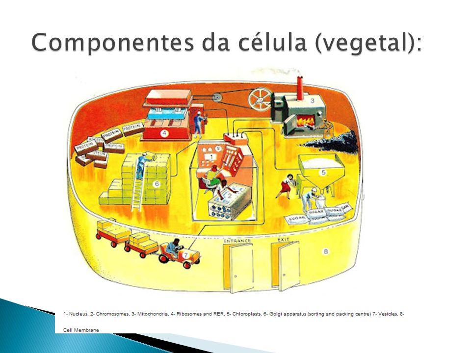 Componentes da célula (vegetal):