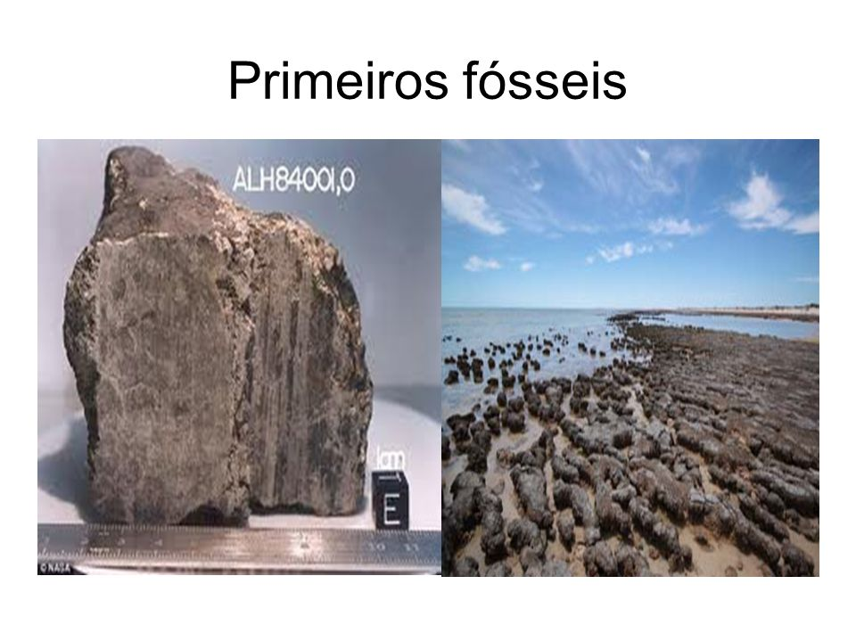 Primeiros fósseis