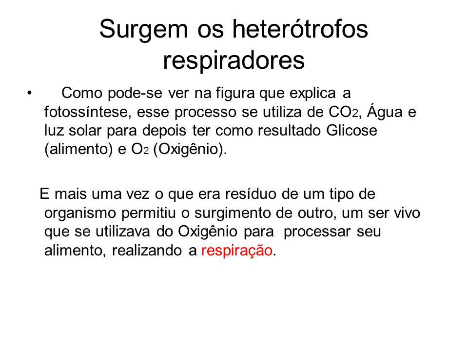Surgem os heterótrofos respiradores