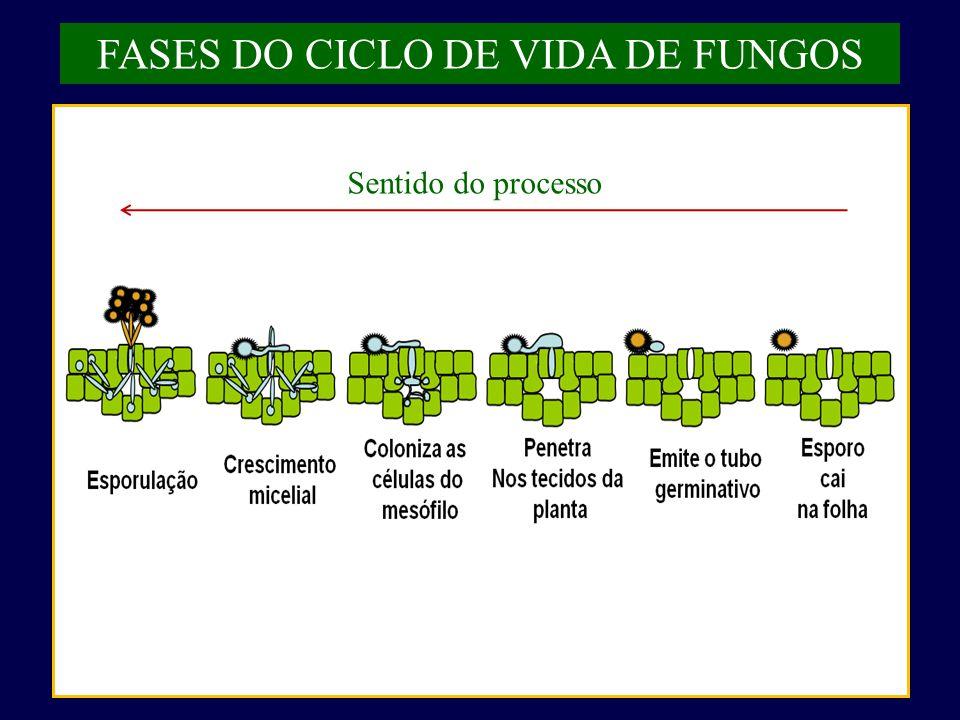 FASES DO CICLO DE VIDA DE FUNGOS