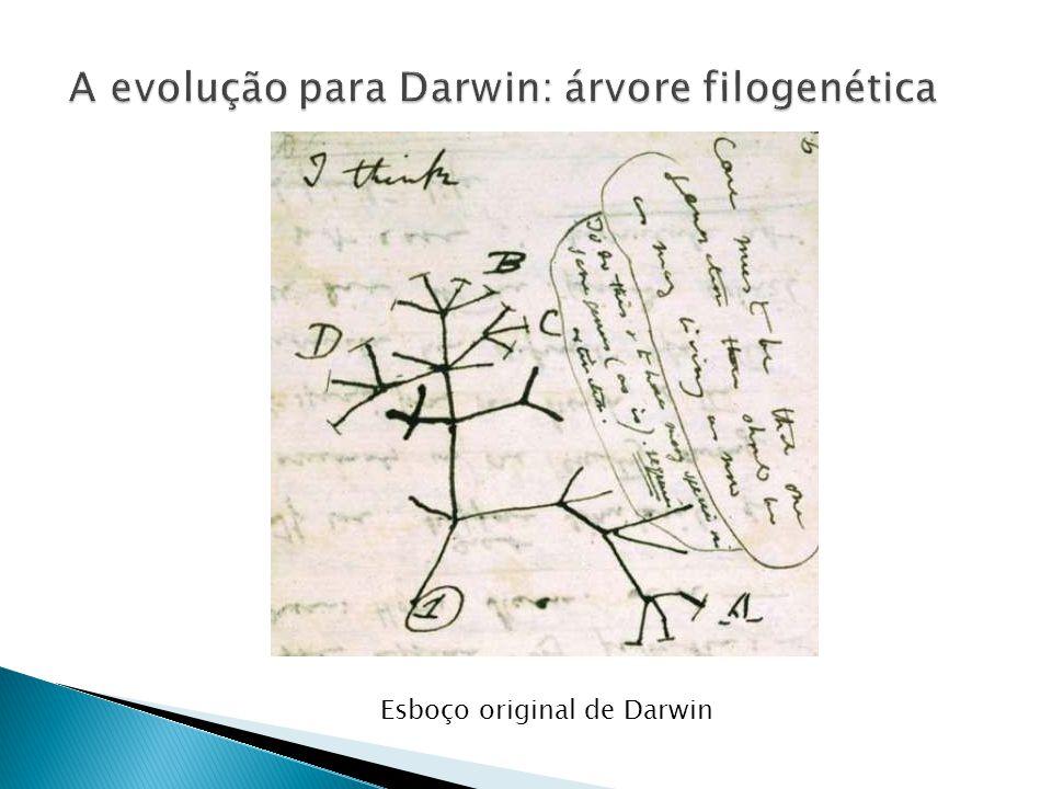 A evolução para Darwin: árvore filogenética