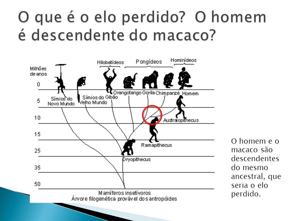 O que é o elo perdido O homem é descendente do macaco