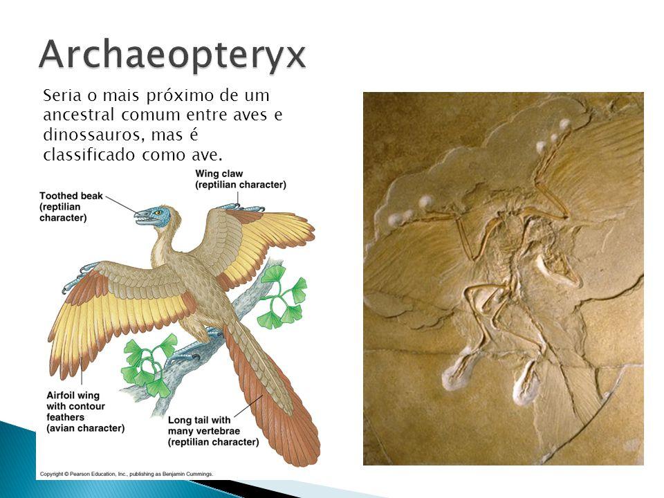 Archaeopteryx Seria o mais próximo de um ancestral comum entre aves e dinossauros, mas é classificado como ave.