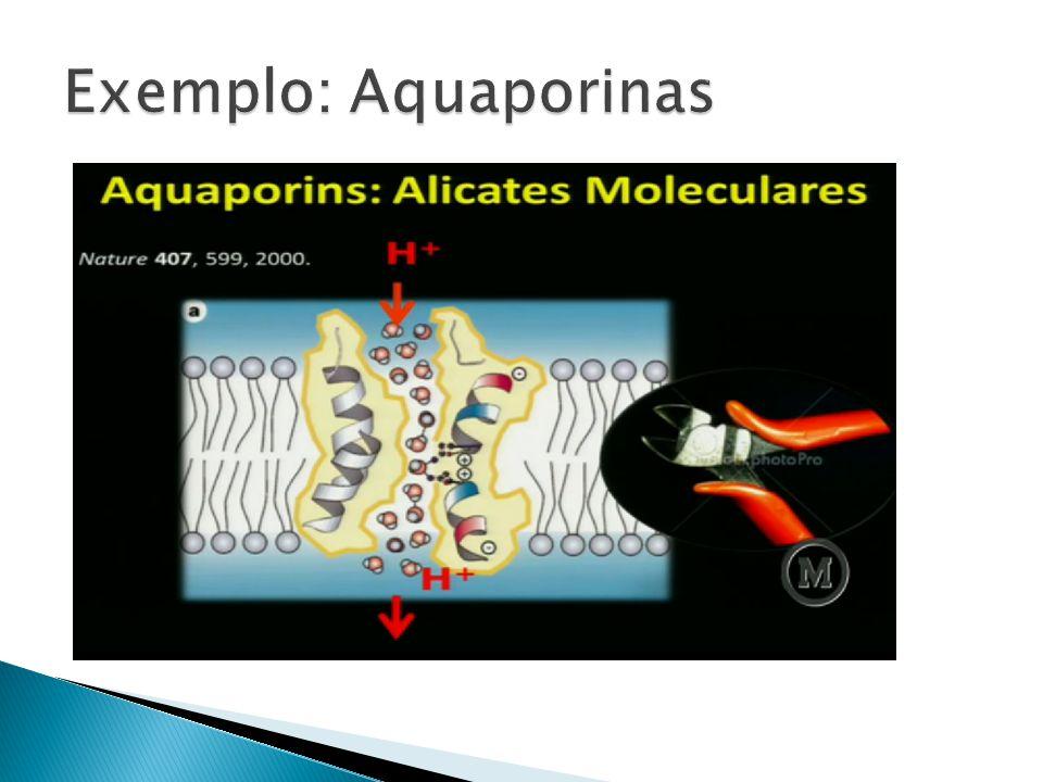 Exemplo: Aquaporinas