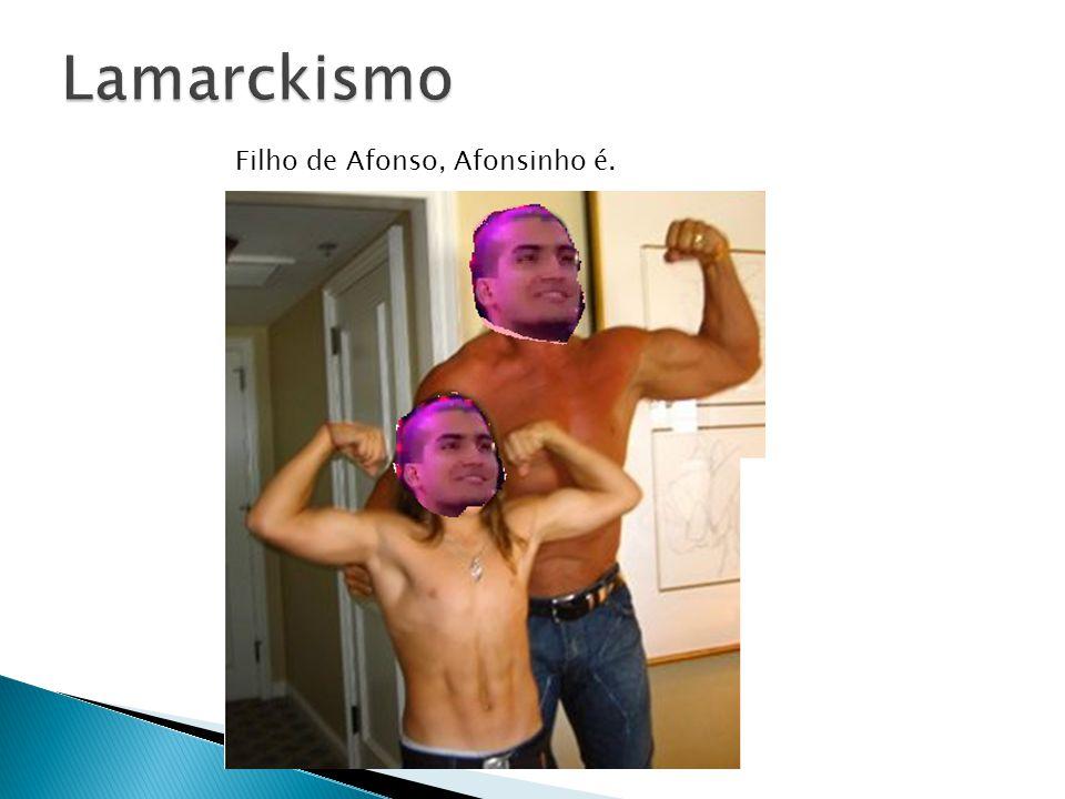 Lamarckismo Filho de Afonso, Afonsinho é.