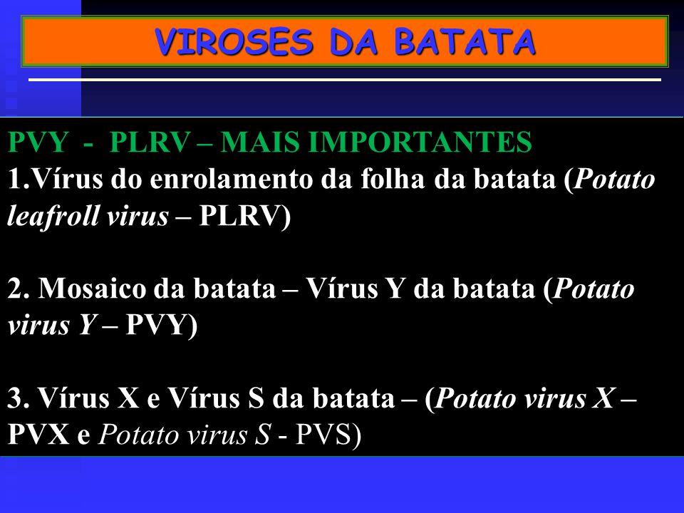 VIROSES DA BATATA PVY - PLRV – MAIS IMPORTANTES