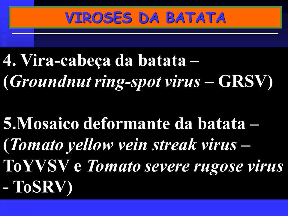 4. Vira-cabeça da batata – (Groundnut ring-spot virus – GRSV)