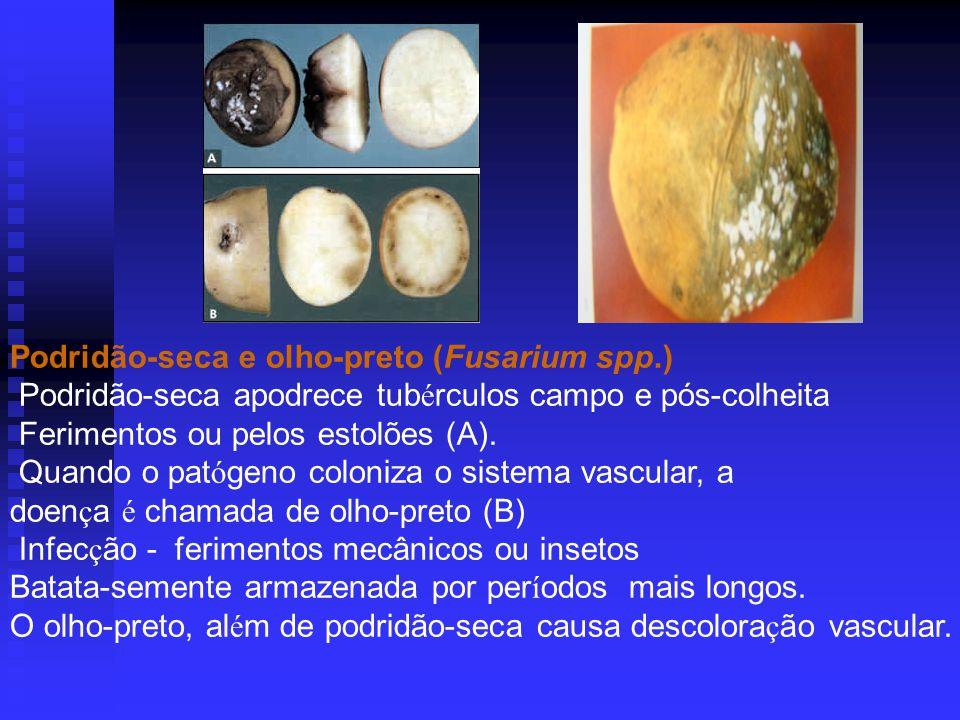 Podridão-seca e olho-preto (Fusarium spp.)