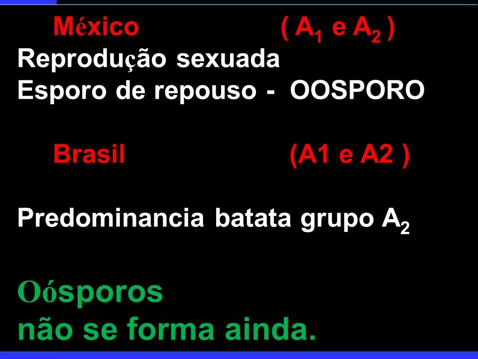 Oósporos não se forma ainda. México ( A1 e A2 ) Reprodução sexuada