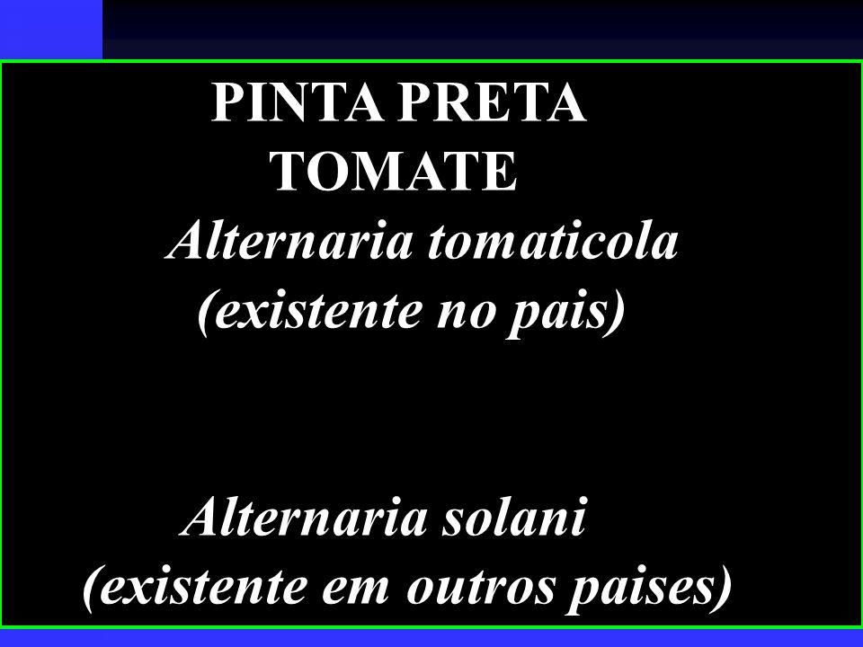 PINTA PRETA TOMATE. Alternaria tomaticola. (existente no pais) Alternaria solani.