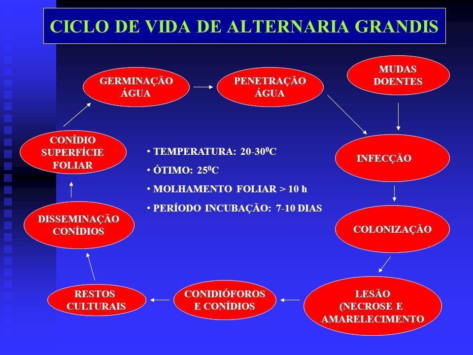 CICLO DE VIDA DE ALTERNARIA GRANDIS