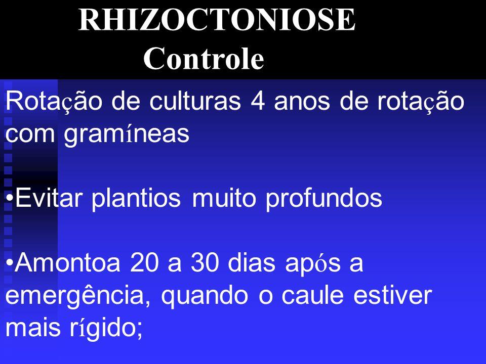 RHIZOCTONIOSE Controle