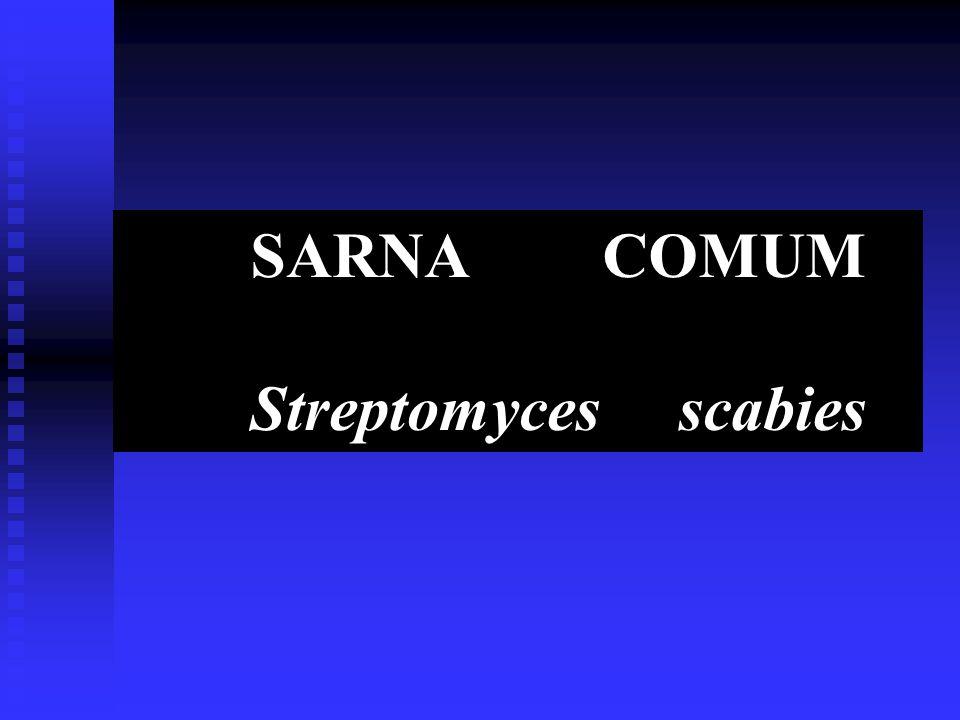 SARNA COMUM Streptomyces scabies