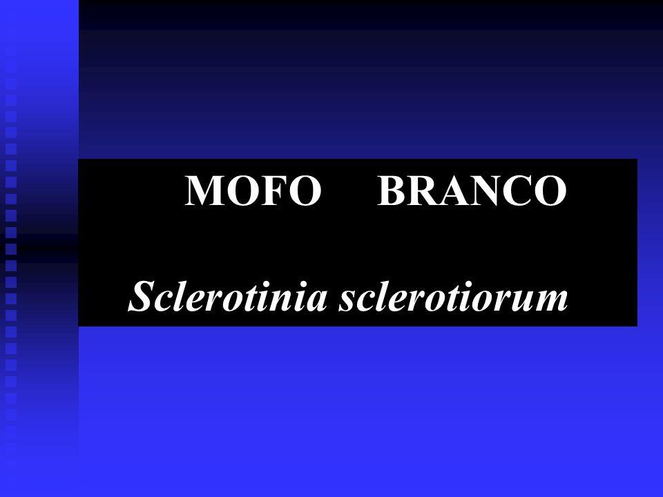 MOFO BRANCO Sclerotinia sclerotiorum