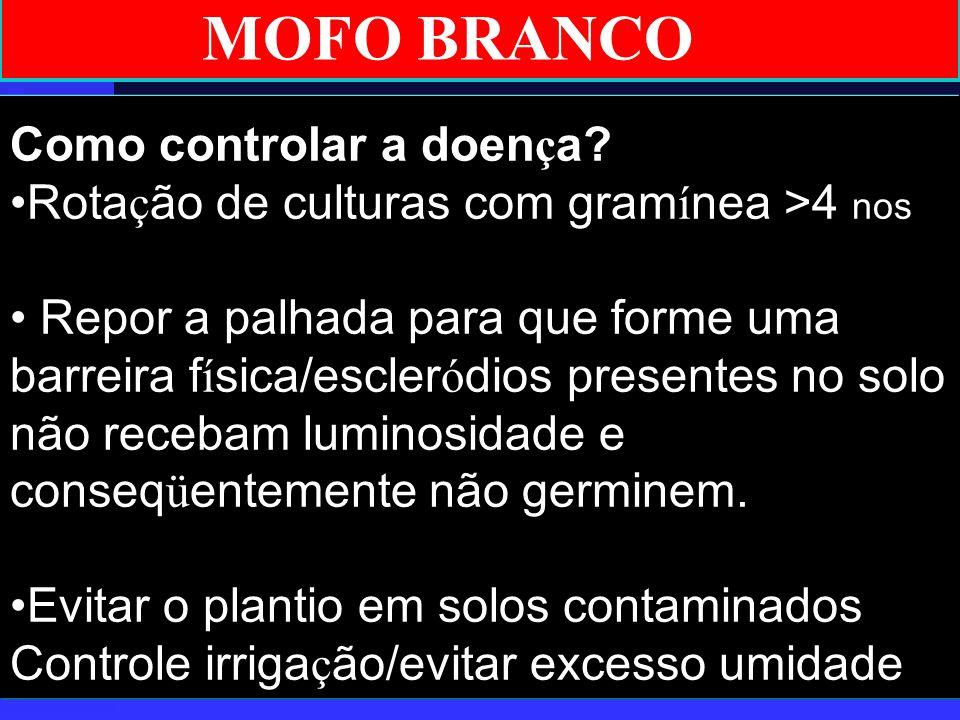 MOFO BRANCO Como controlar a doença