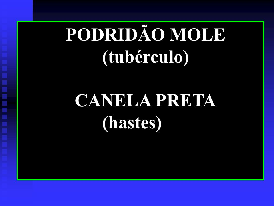 PODRIDÃO MOLE (tubérculo) CANELA PRETA (hastes)
