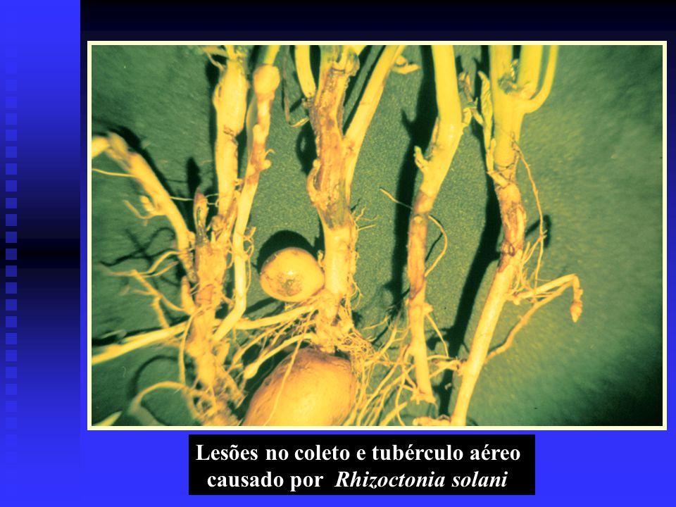 Lesões no coleto e tubérculo aéreo