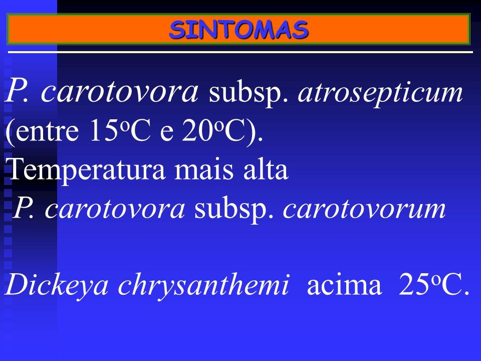 P. carotovora subsp. atrosepticum (entre 15oC e 20oC).