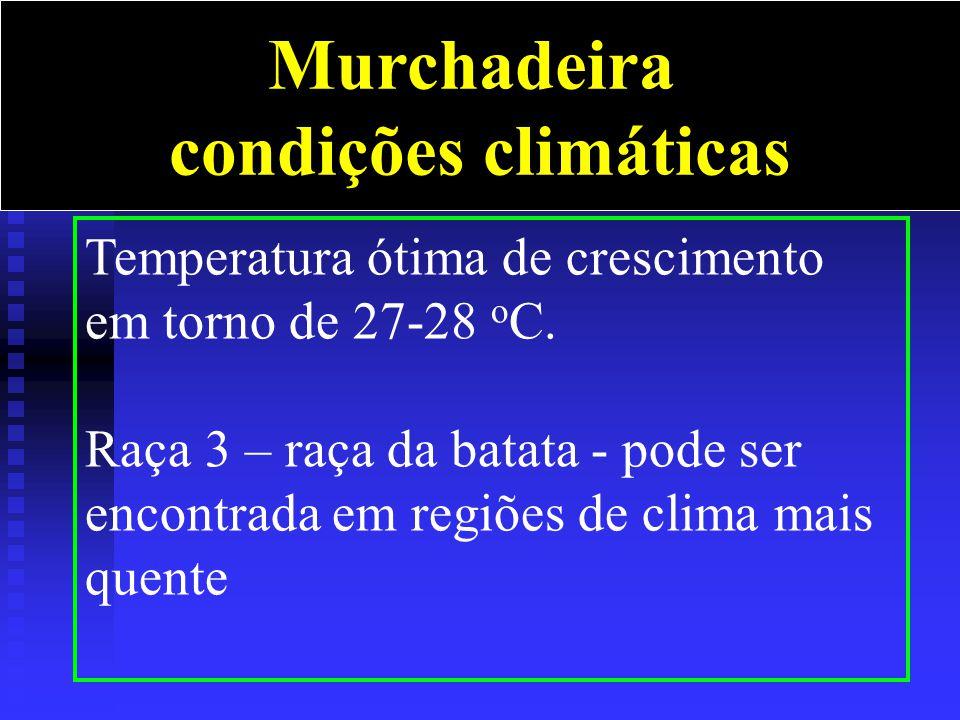 Murchadeira condições climáticas