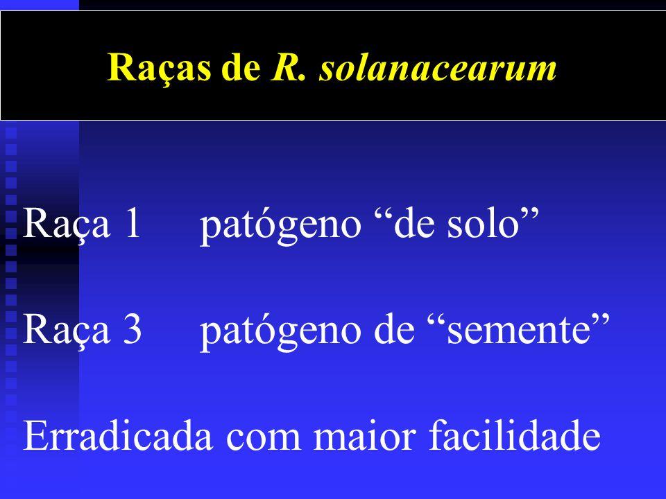 Raças de R. solanacearum