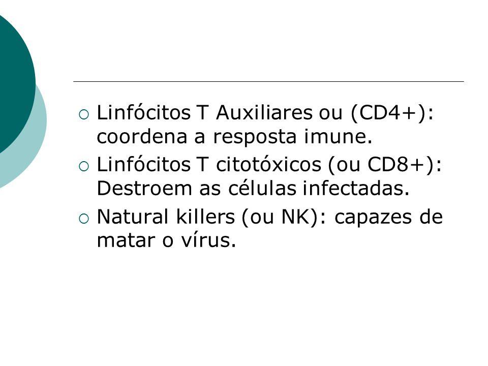 Linfócitos T Auxiliares ou (CD4+): coordena a resposta imune.