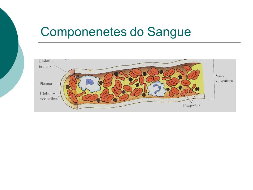 Componenetes do Sangue